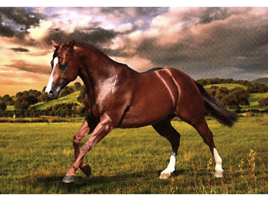 1727 2 pohlednice quarter horse ryzak