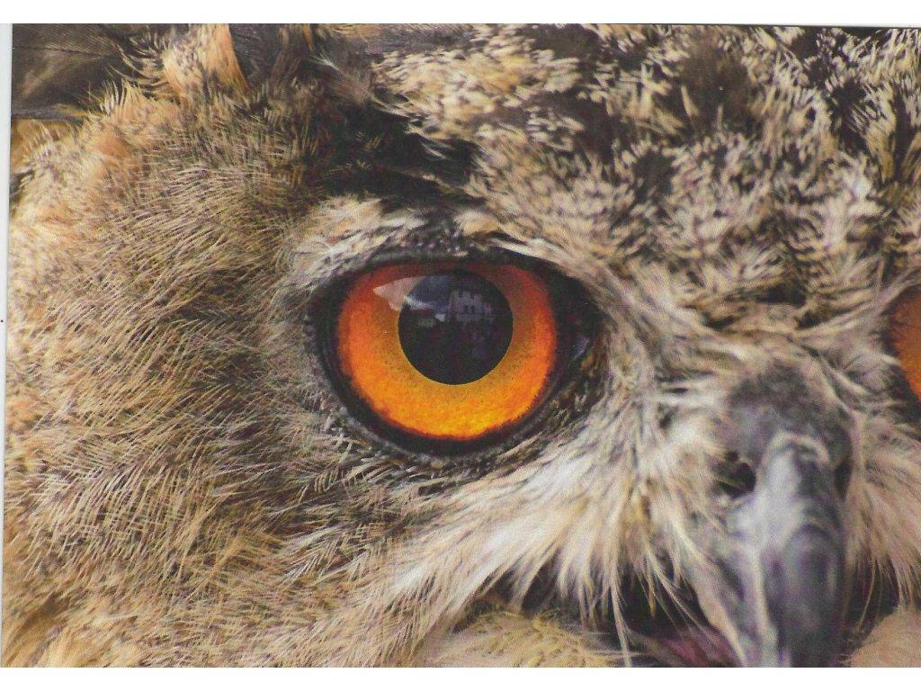 Postcard Owl Eye