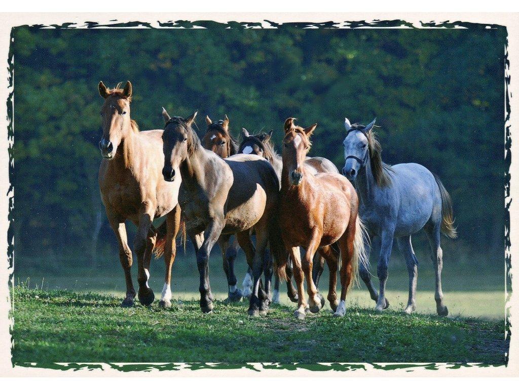 Postcard herd Czech Warmblood and welsh pony