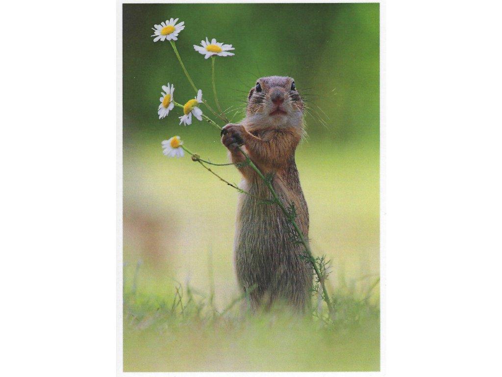 Postcard Squirrel dancer