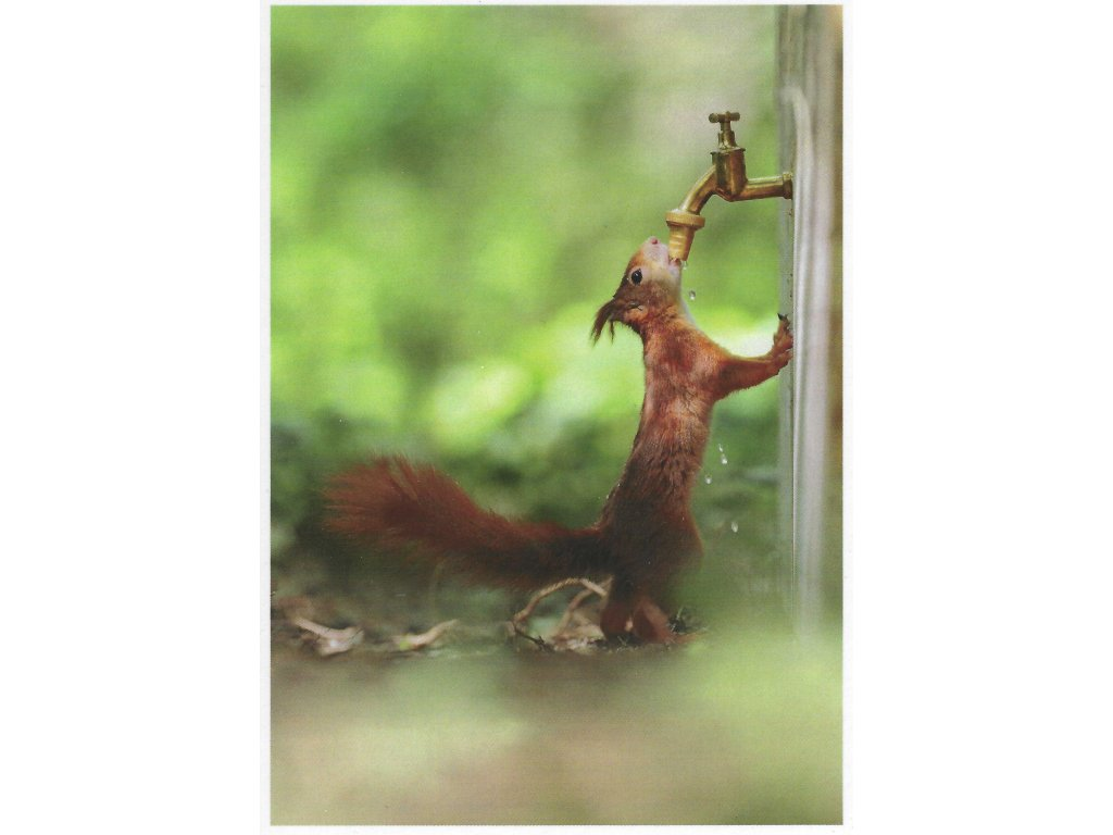 Postcards Squirrel and tap