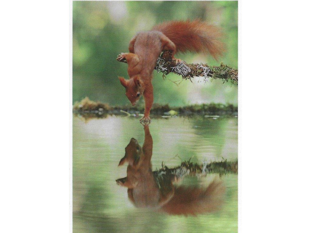 14195 3 pohlednice veverka a vodni zrcadlo