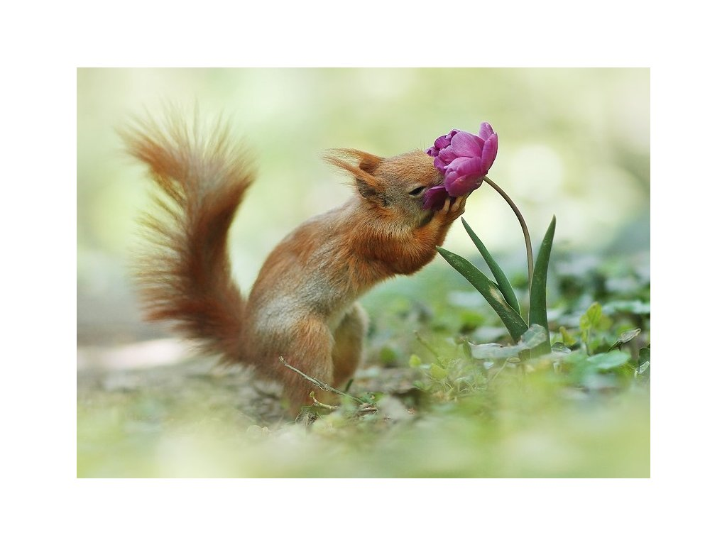 15416 3 pohlednice veverka s napojem