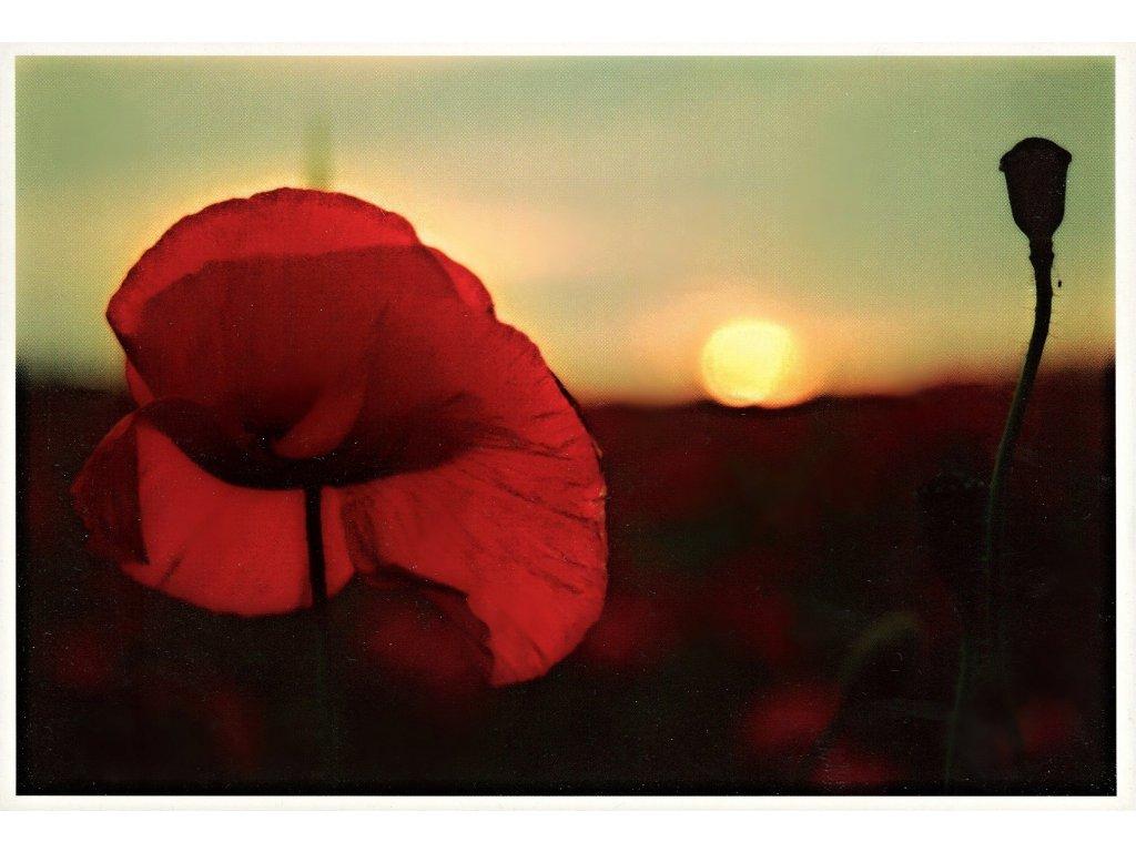 Postcards Poppies 2