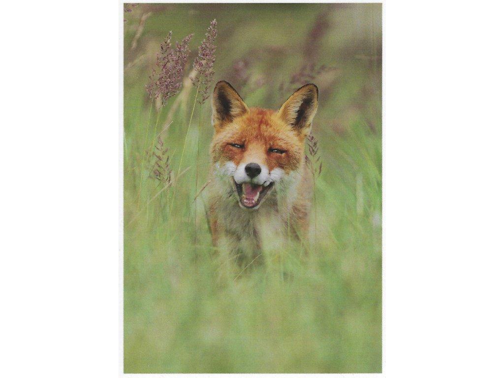 Postcards all smiles fox