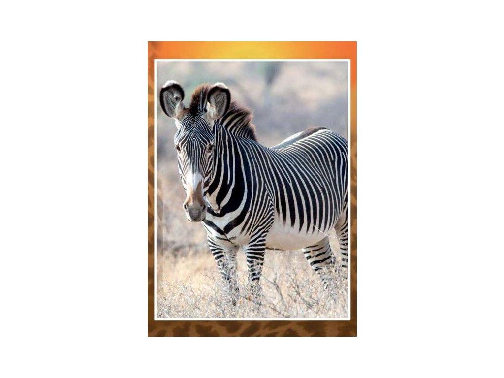 8309 3 pohlednice zebra