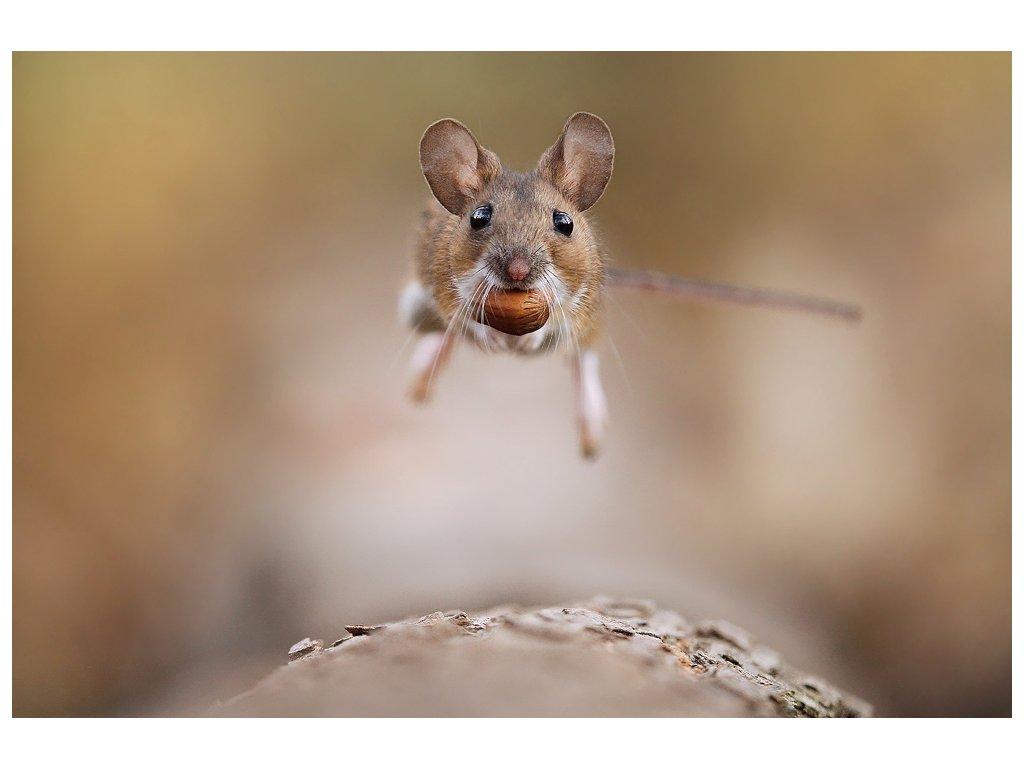 Postcard Rat with a catch