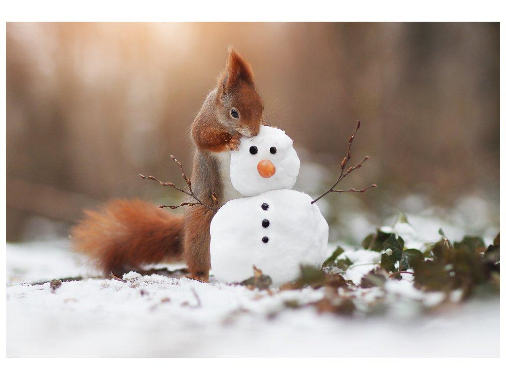 Postcard Squirrel recognizes snowman