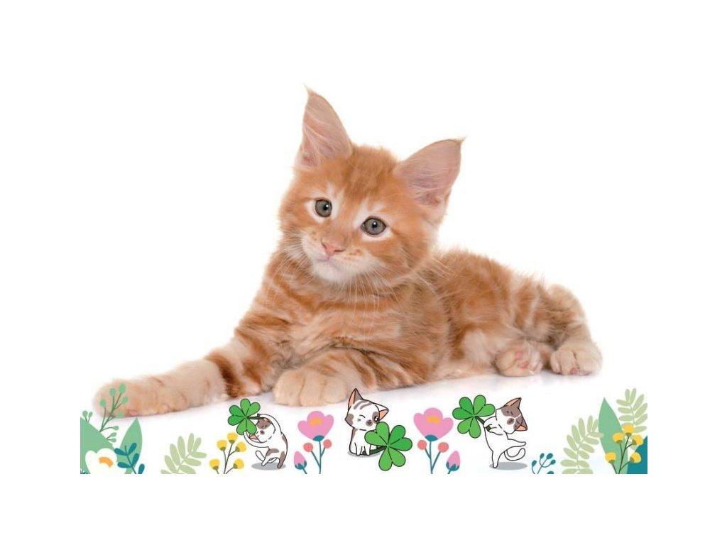 Postcard Red cat