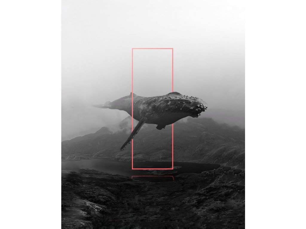 Postcard - Whale in the fog