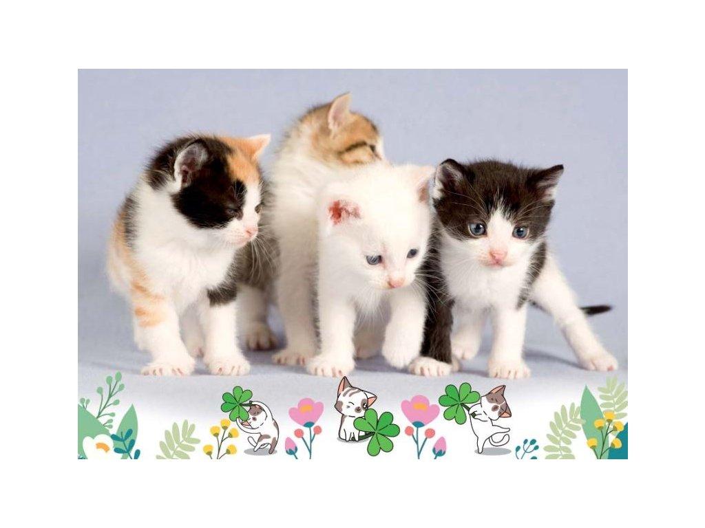 Postcard Kittens