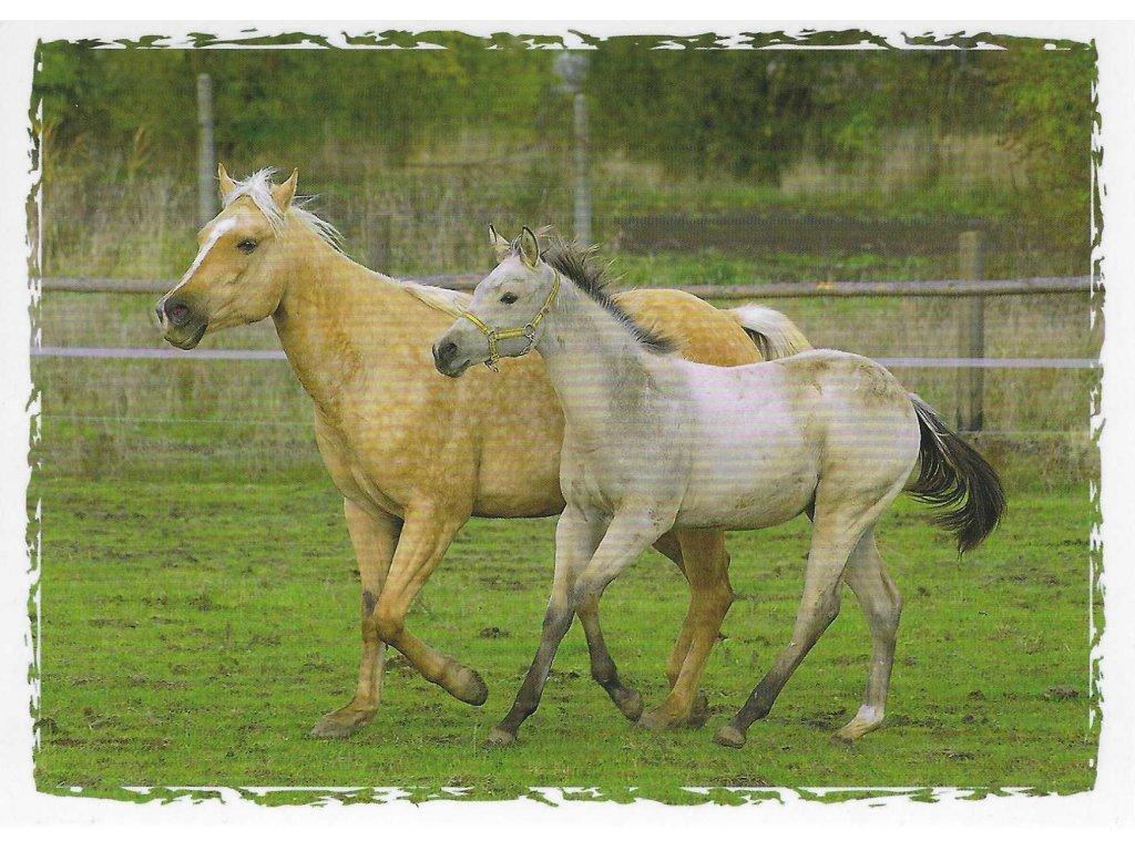 Postcard Horses in trot
