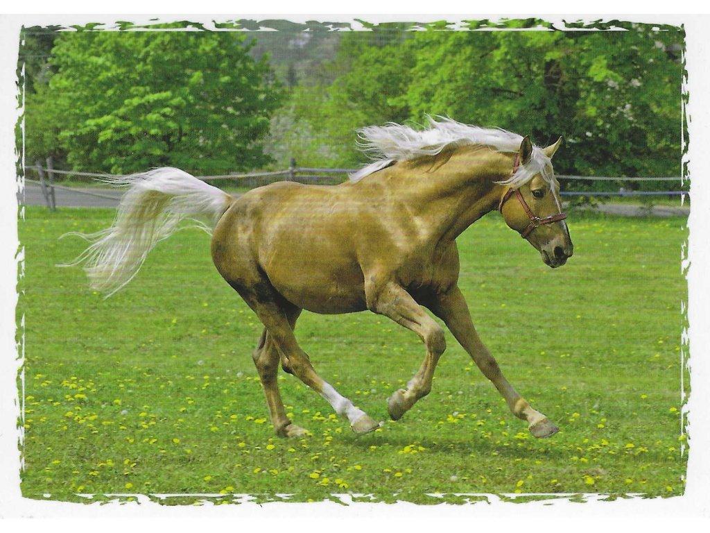 Postcard Horse galloping