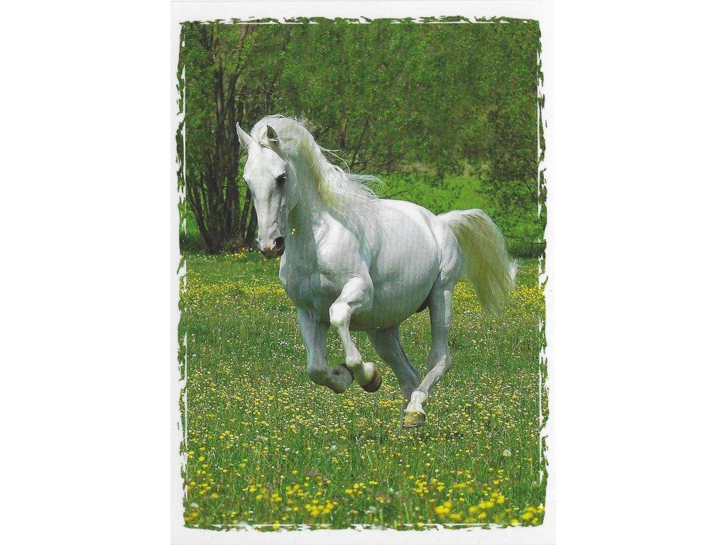 Postcard Beautiful white horse galloping