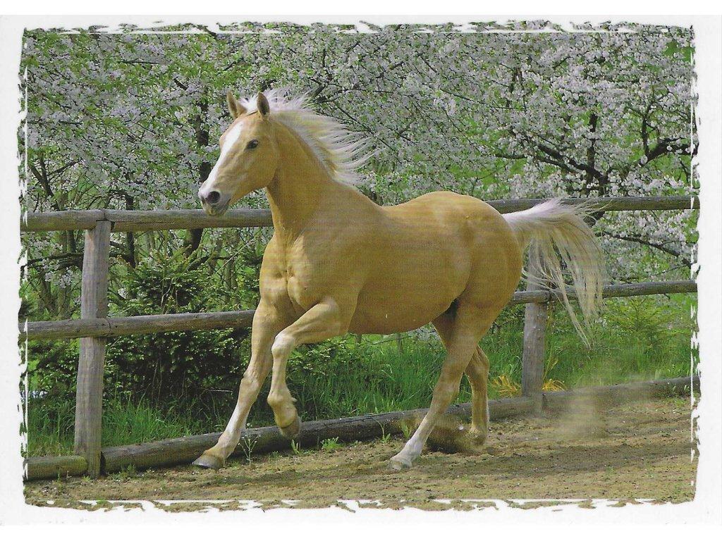 Postcard Beautiful horse in trot