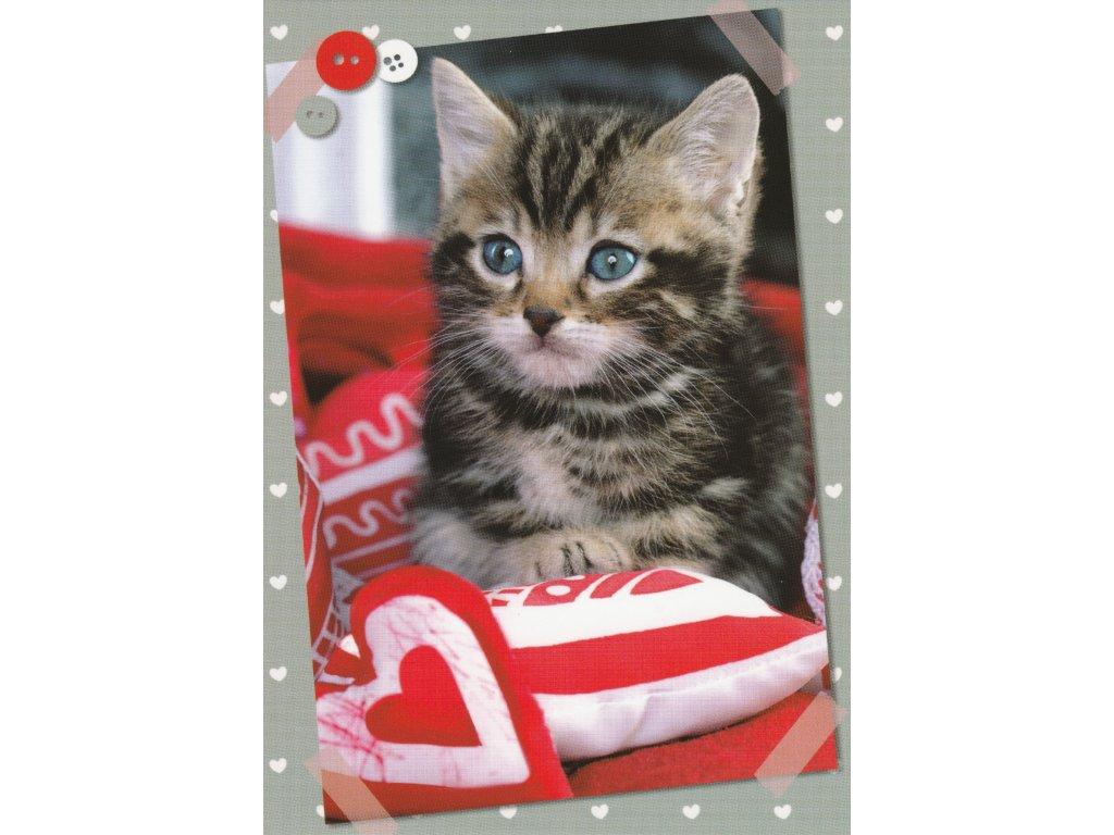 Postcard Kitten in pillows