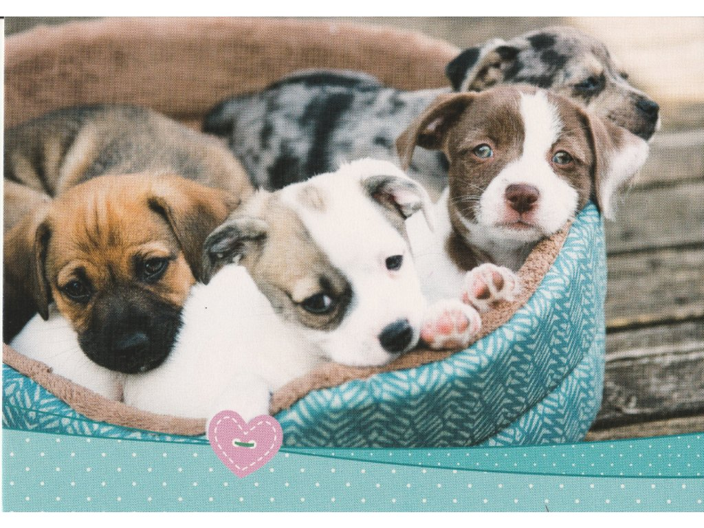 Postcard Puppies in their bed