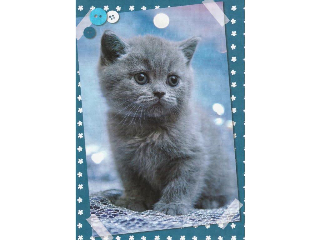 Postcard Kitten British shorthair