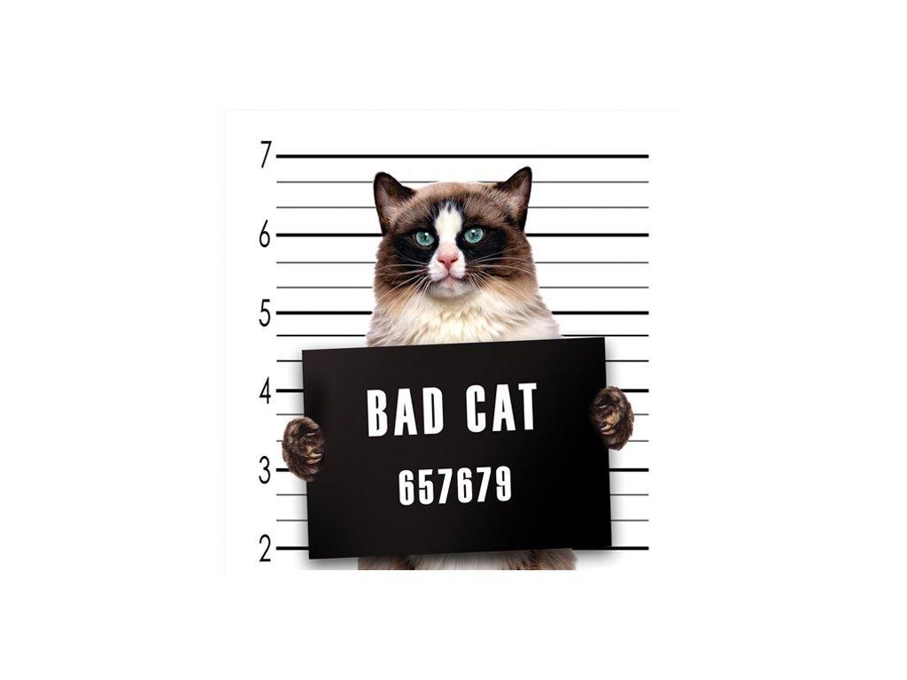 Postcard Bad cat 15x15 cm