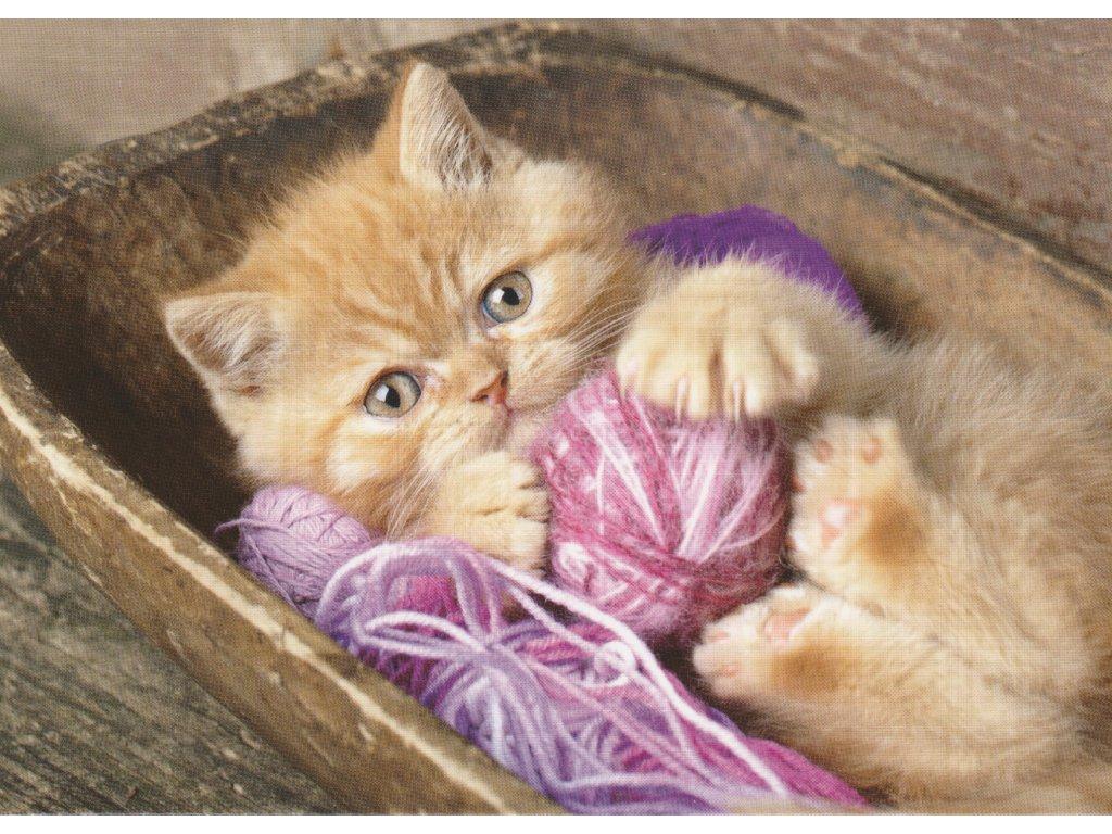 Postcard Kitten with skein