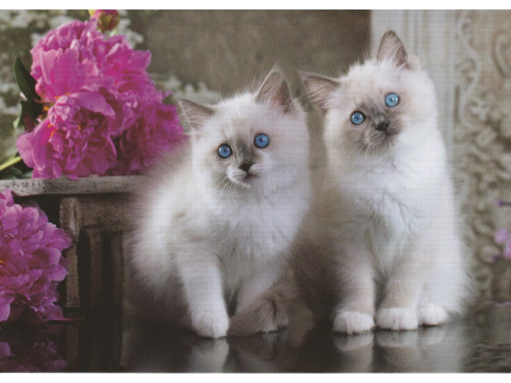 Postcard Kittens with paeonies
