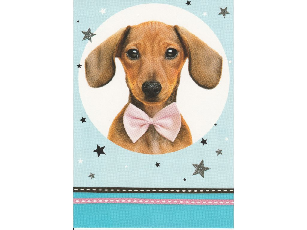 Postcard Puppy with a bowtie