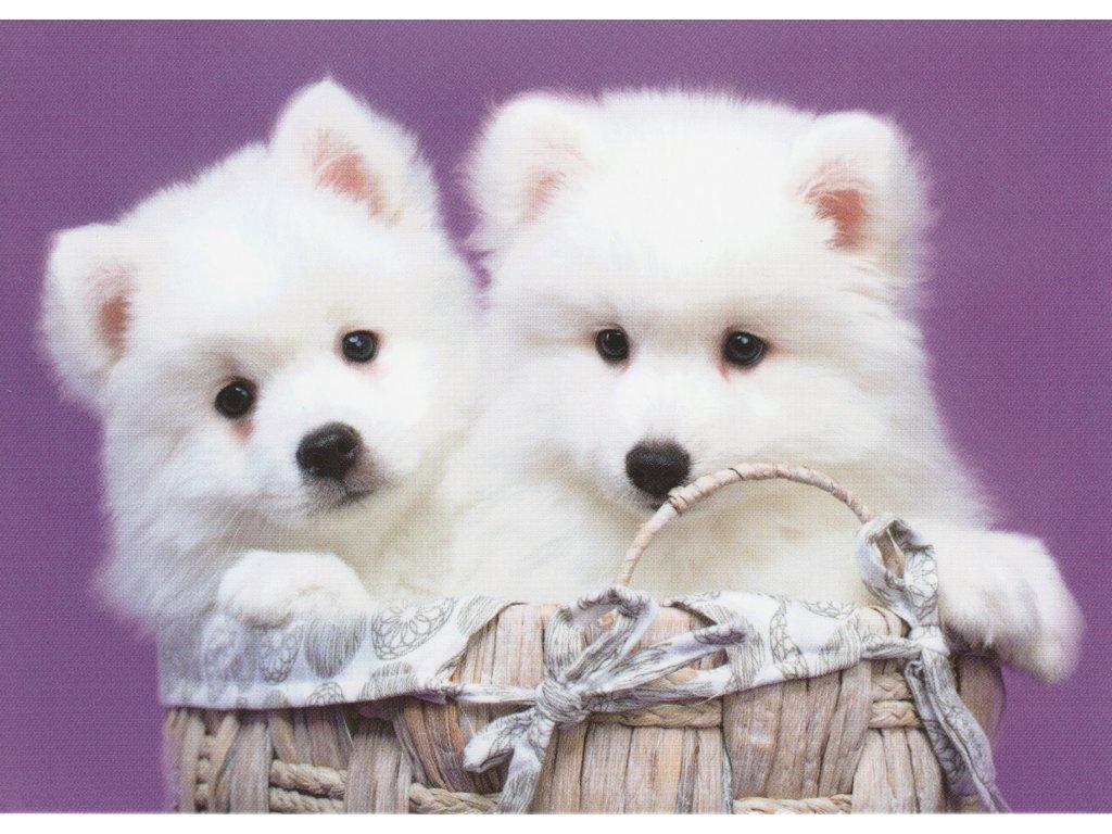 Postcard Puppies in basket