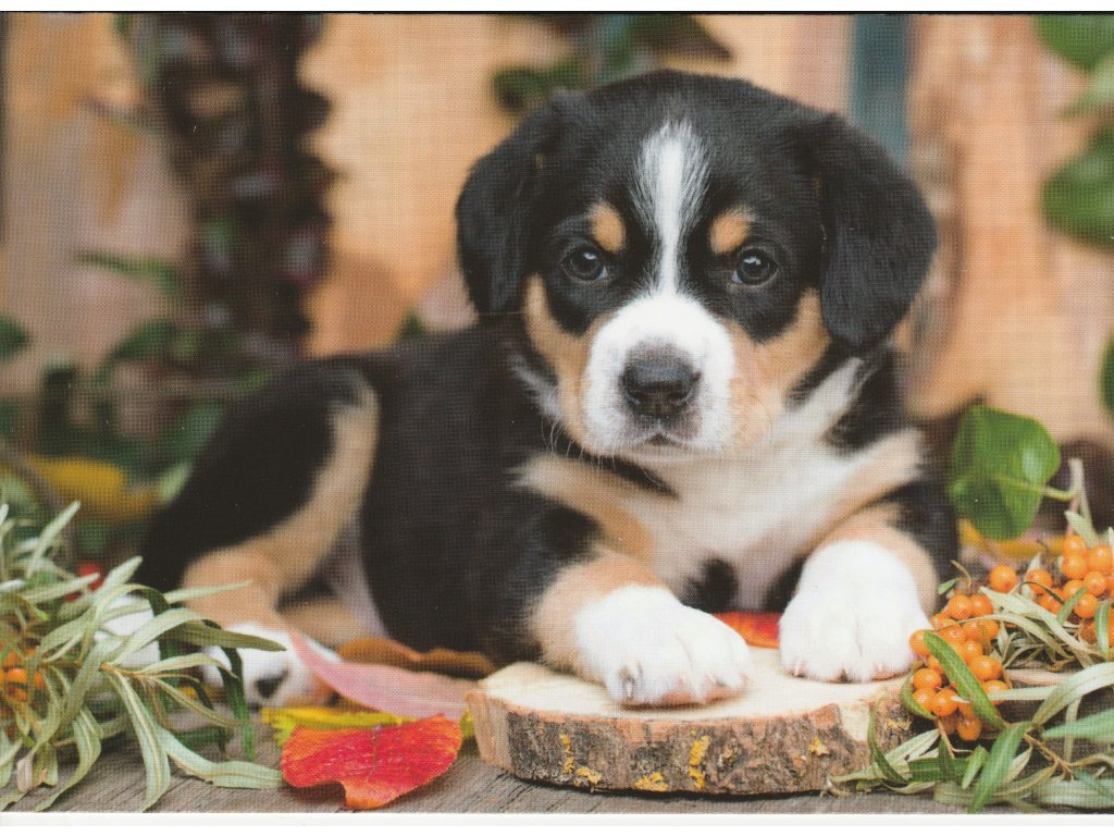 Postcard Puppy with sea buckthorn