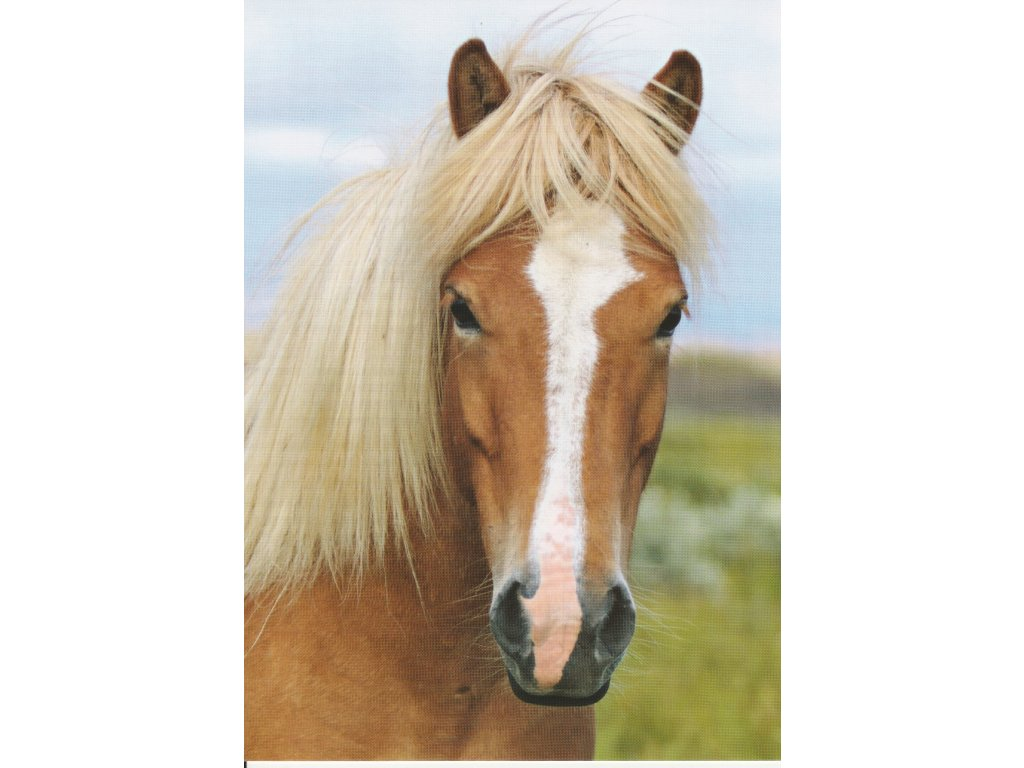 Postcard Horse with blond mane