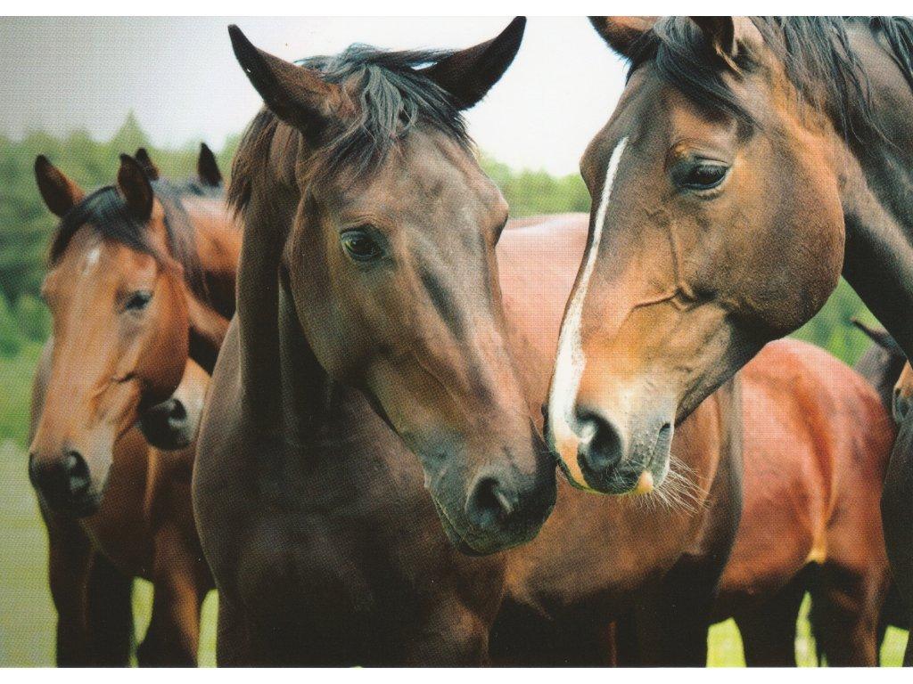 Postcard Horse comitee