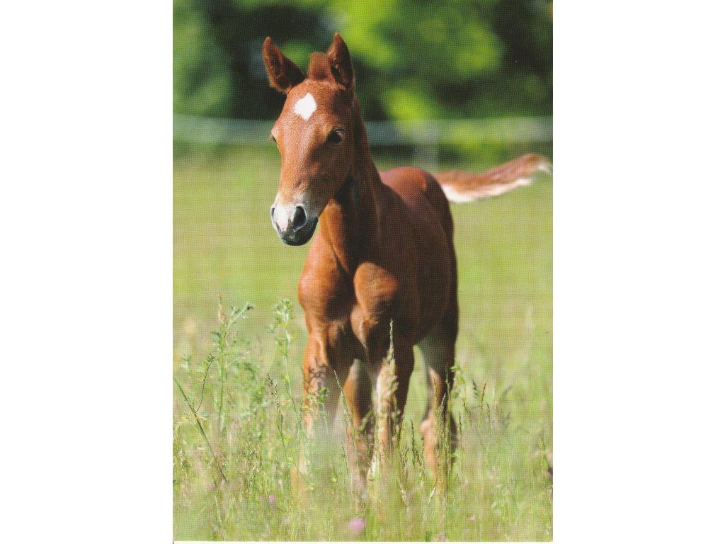 Postcard Foal in the meadow