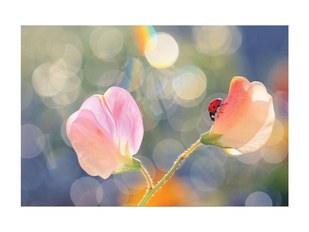 Postcard Ladybug and peas