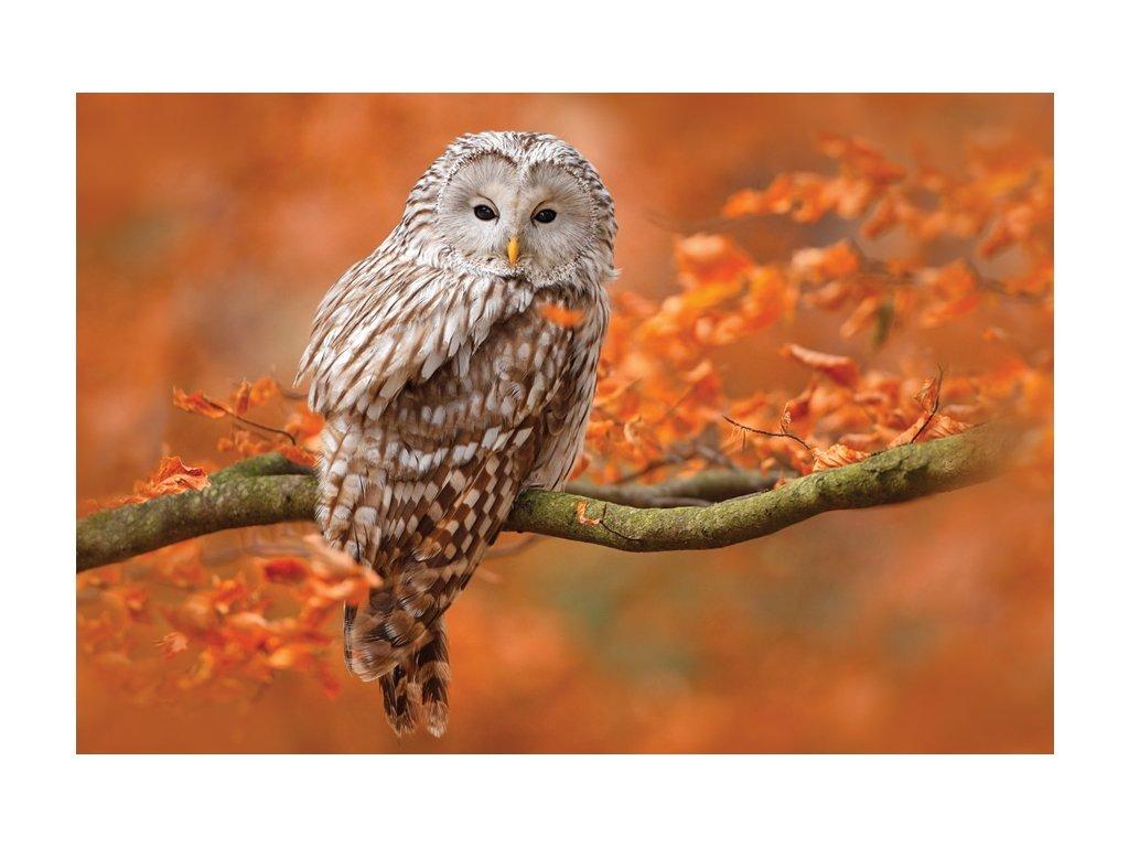 Postcard Barn owl