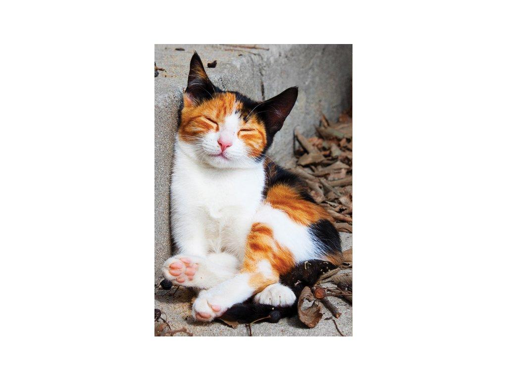 Postcard Sleepy cat