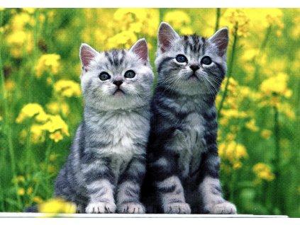 1745 2 pohlednice kotata v repce