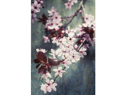 9428 2 pohlednice kvety tresne