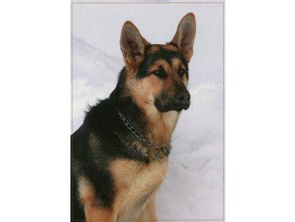 5054 1 pohlednice pes nemecky ovcak