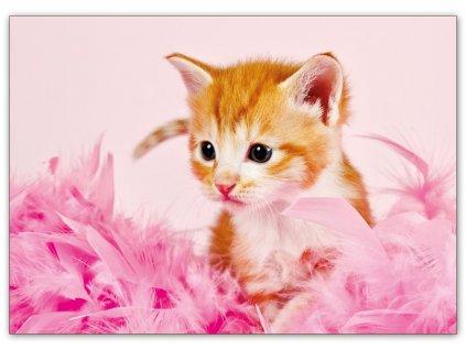 Postcard sprightly kitten