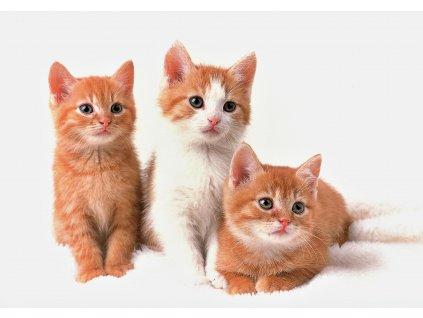 1739 2 pohlednice tri zrzava kotata na bilem pozadi
