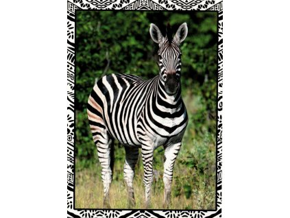 Postcards Zebra