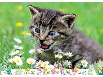 Postcard Kitten in the meadow