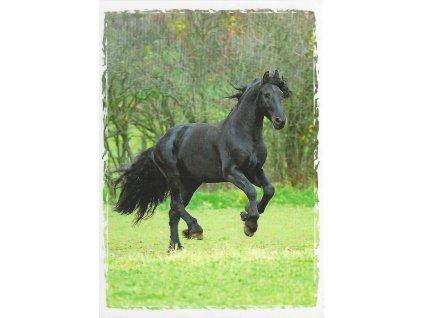 Postcard Beautiful black horse in trot