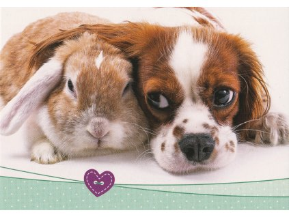 Postcard Puppy with rabbit