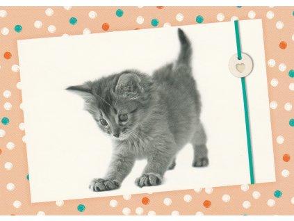 Postcard Curious kitten