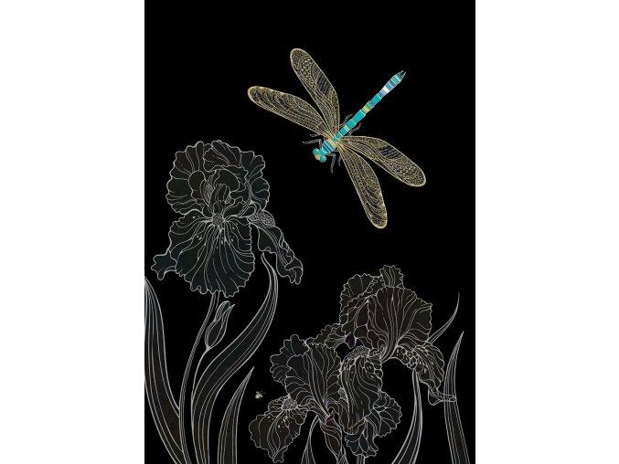M153 Dragonfly Irises