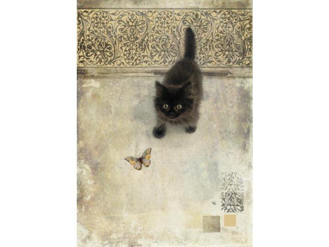 D147 Black Kitten 1