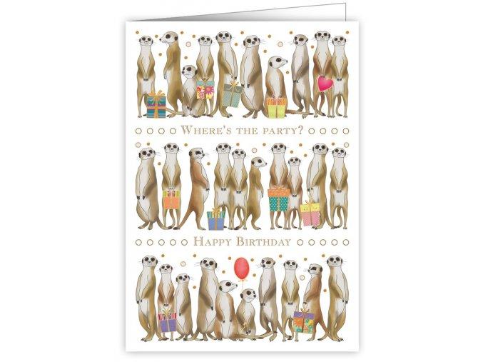 meerkats 3344