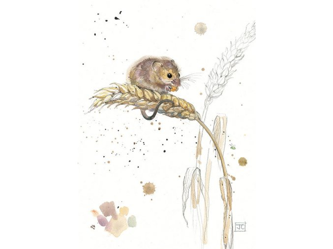 F002 Harvest Mouse2