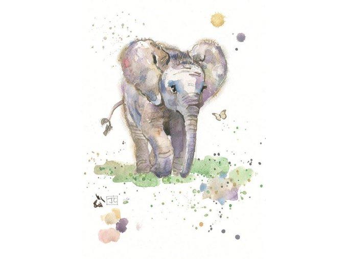 F005 Baby Elephant2