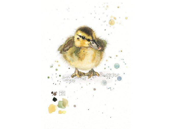 F006 Mallard Duckling2